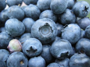Bunch_of_blueberries,_one_unripe
