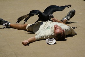 man collapsed vulture taking out of hand