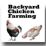 backyard chicken farming