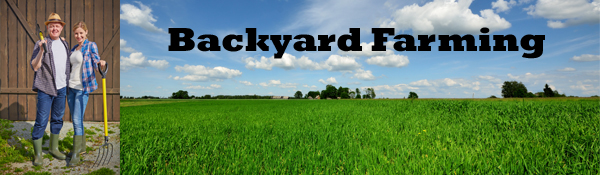 backyardfarming2