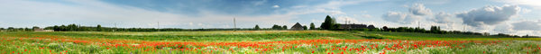 farming fields with flowers banner