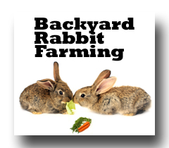 backyard rabbit farming